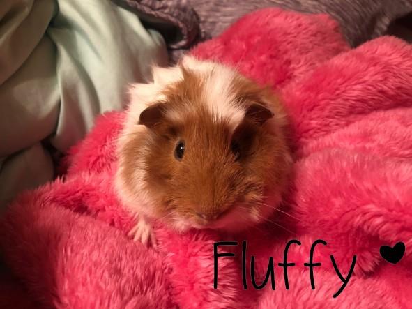 fluffy]