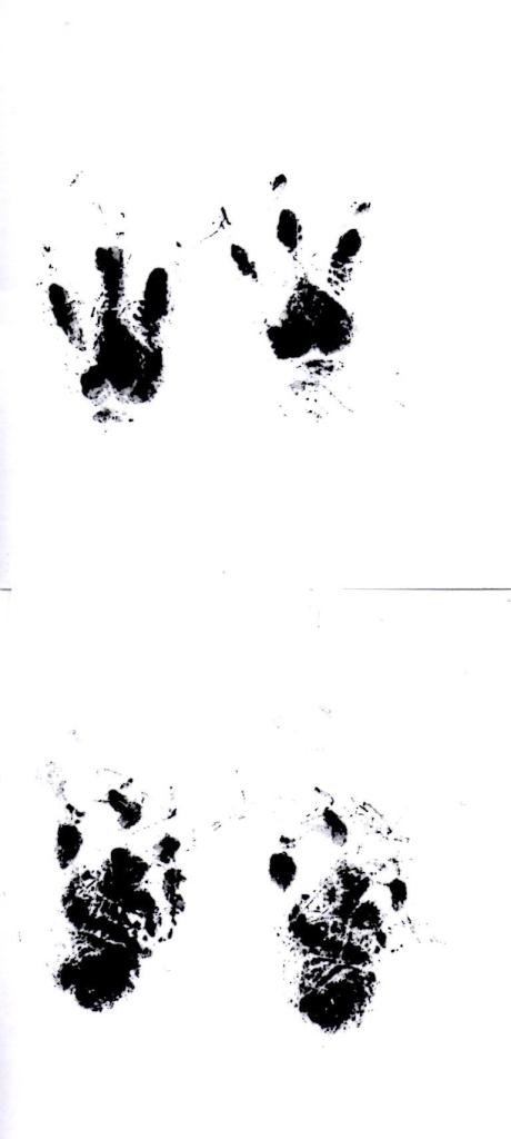Stinky paw prints